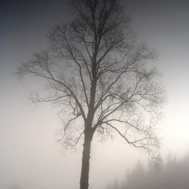 silent-morning