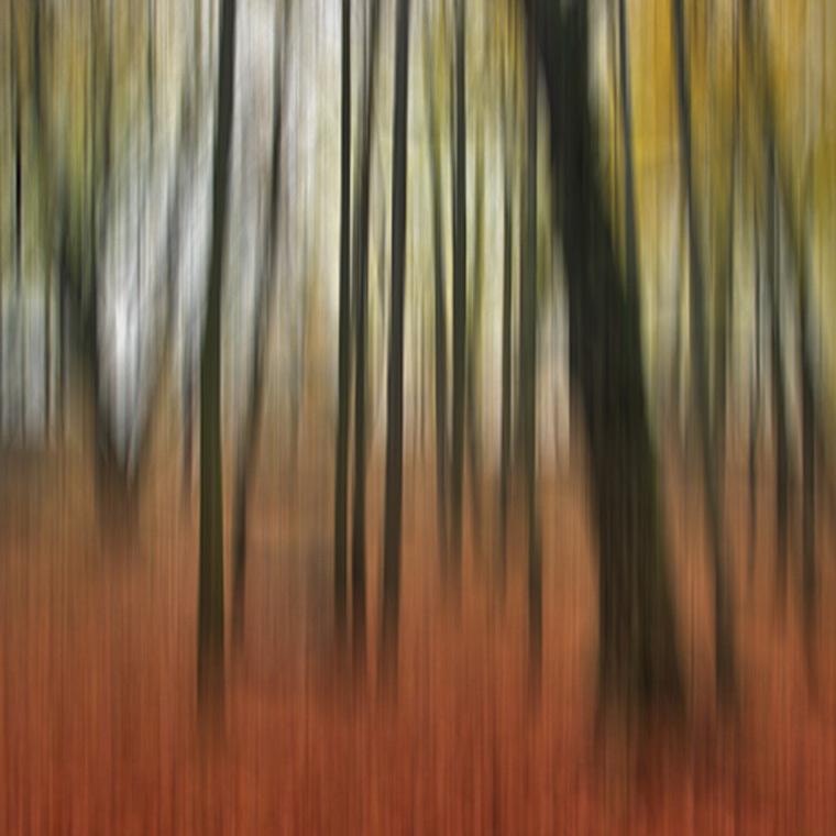 Autumn Forest / Podzimní les