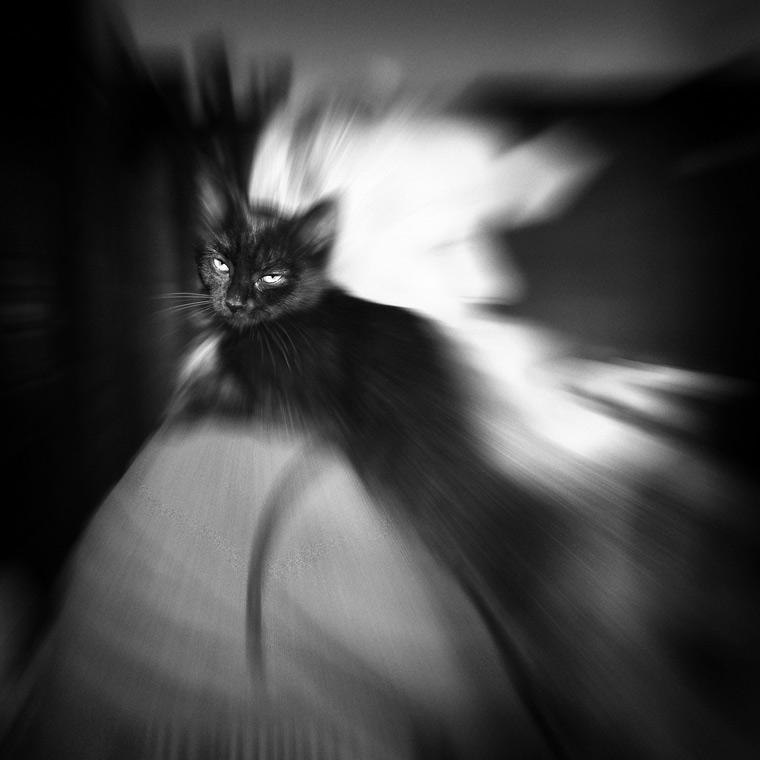 Black Cat / Černá kočka