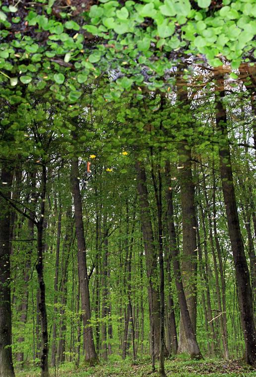 Forest Mirror / Lesní zrcadlo