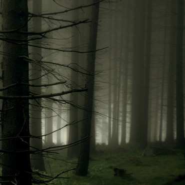 Mist-in-the-Forest