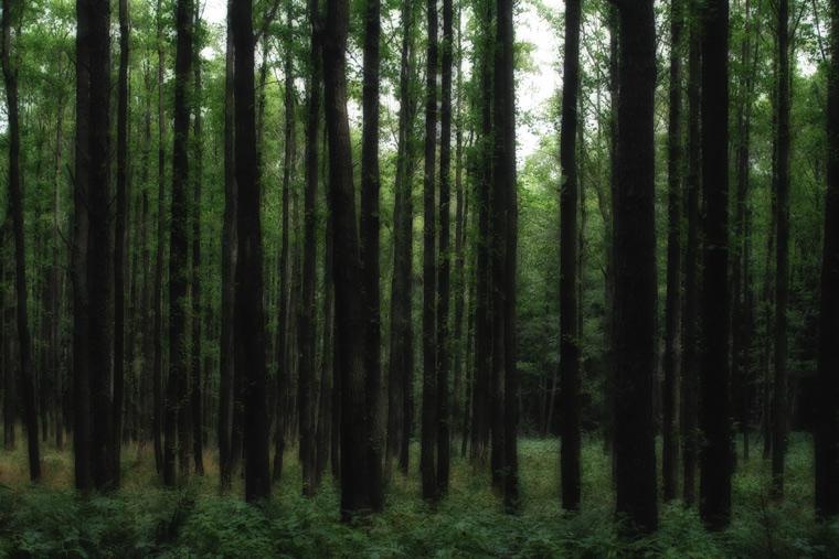 Ryhop Forest / Ryhopský les