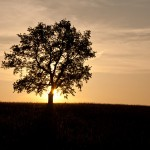 Sun-Behind-the-Oak
