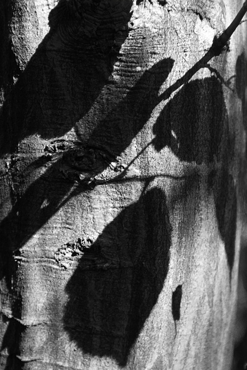 Shadow of the Autumn / Stín podzimu