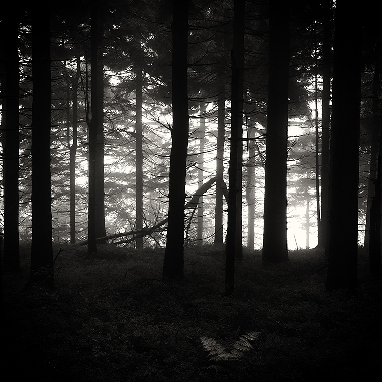 Lonely Fern