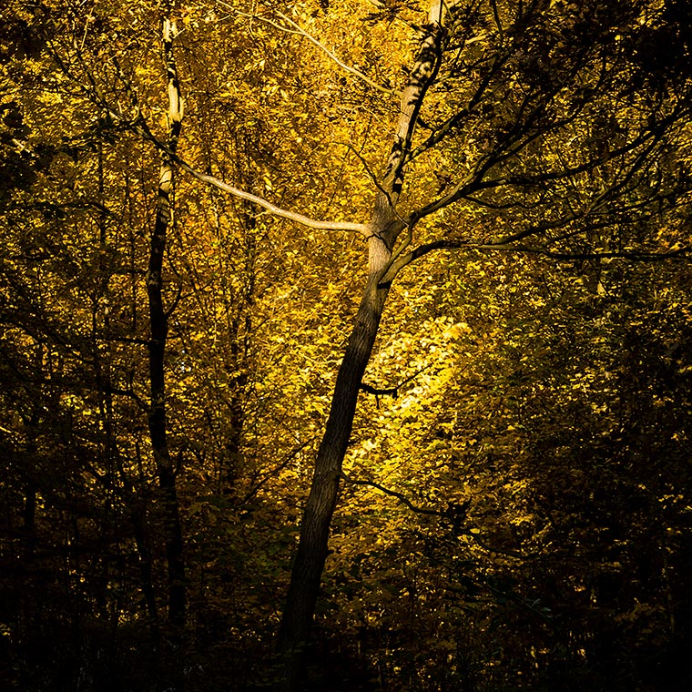 Light in the Branches / Světlo ve větvích