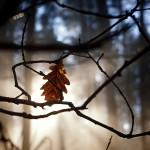 Sun Behind the Leaf