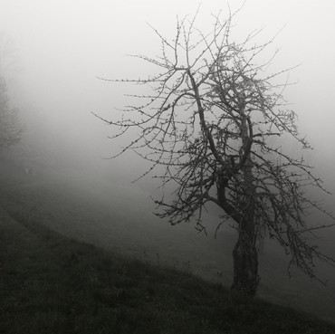 misty_path