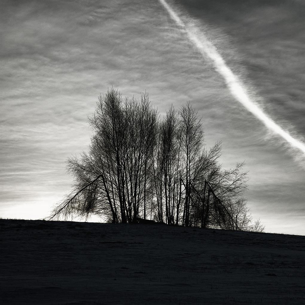 Birches Resistance / A břízy vzdorujou