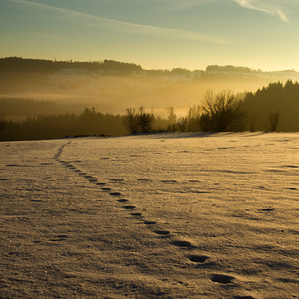 Golden Morning / Zlatý ráno
