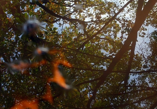 Mirror of the Autumn II / Zrcadlo podzimu II