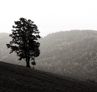 B&W Tree / ČB strom