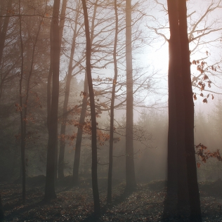 Beechwood / Bukový les
