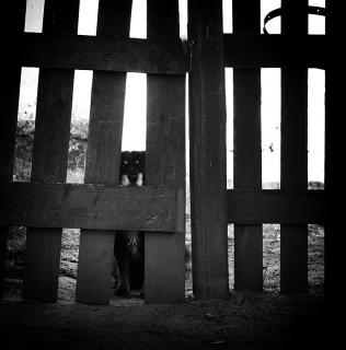 Behind the Fence / Za plotem