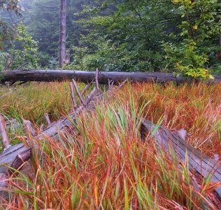 Wild Forest / Bukačka