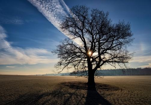 Our Oak Tree / Náš dub