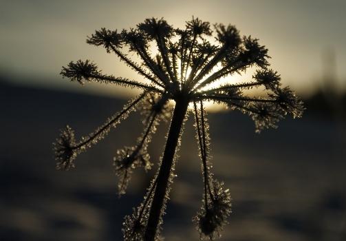 Dawn of Spring / Úsvit jara