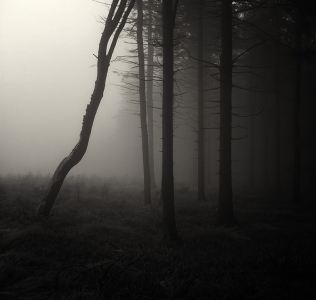 The Edge / Kraj lesa