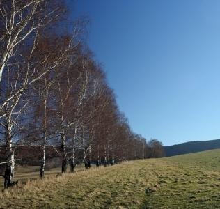 Jeseniky Hillsides / Úbočí Jeseníků