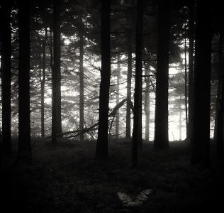 Lonely Fern / Kapradina samotář