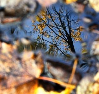 Mirror of the Autumn / Zrcadlo podzimu