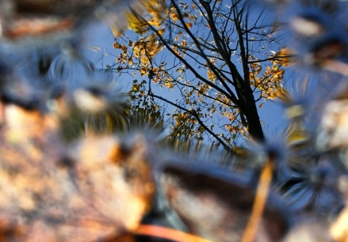 Mirror of the Autumn / Zrcadlo podzimu