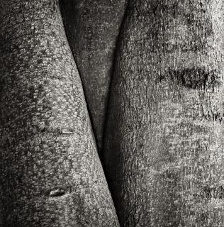 Mystery of the Tree / Tajemství jednoho stromu