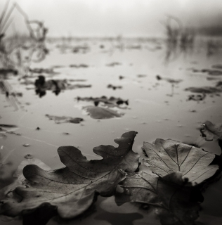 November's Still Life / Listopadové zátiší