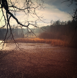Released Pond / Vypuštěný Vilém