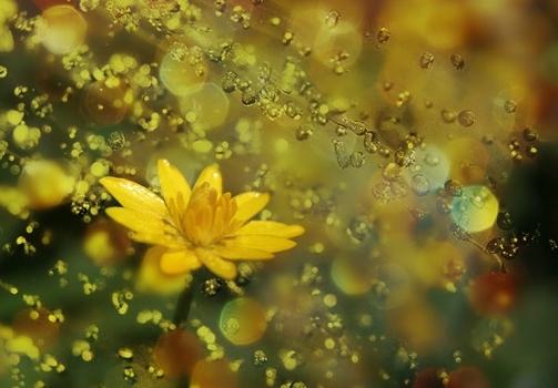 Spring Collage / Jarní koláž
