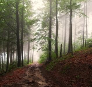 The Misty Road / Cesta v mlze