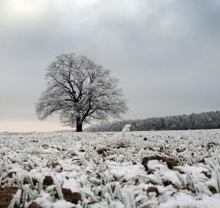 White Frost / Jinovatka