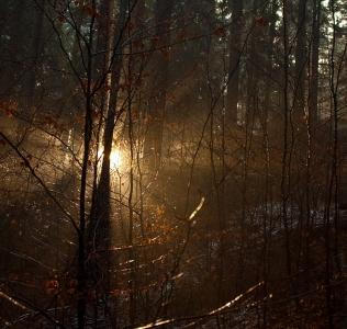 Winter Sun / Zimní slunce
