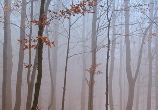 In Beechwood / V bukovém lese