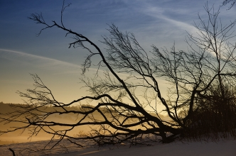 Branches / Klacky