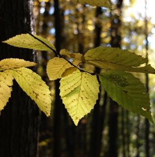 Light in the Leaves / Světlo v listí