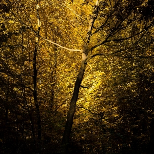Light in the Branches / Světlo ve větvích