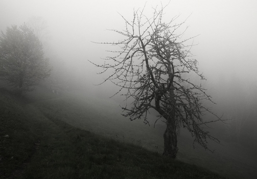 Misty Path / Cesta k hranici