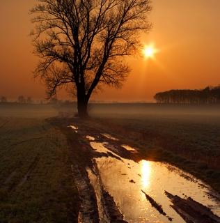 Morning in the Lowlands / Ráno v nížině