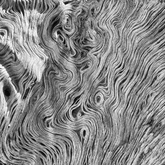 Olive Wood / Olivové dřevo