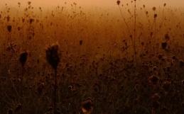Morning Meadow / Ranní louka