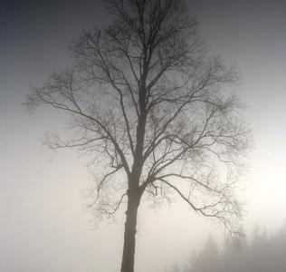 Silent Morning / Tiché ráno