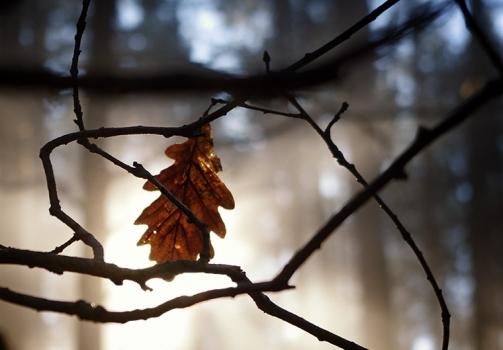 Sun behind the Leaf / Slunce za lupenem