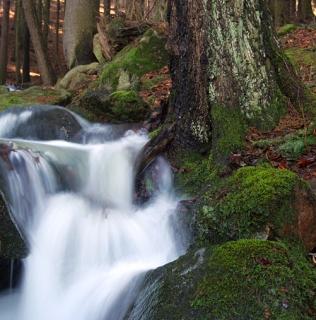 Swift Creek / Bystřina