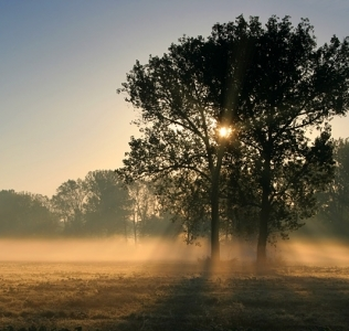 Two Oaks In the Morning Mist III / Duby v ranní mlze III