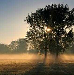 Two Oaks In the Morning Mist III / Duby v ranní mlze III