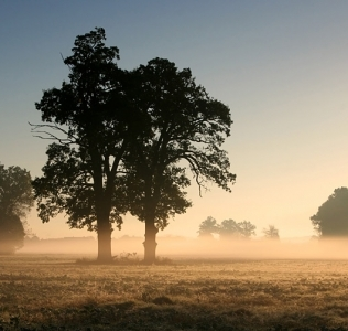 Two Oaks In the Morning Mist II / Duby v ranní mlze II