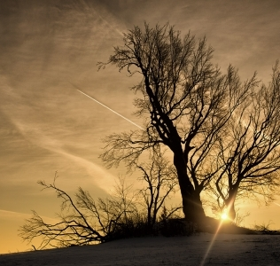 Winter Morning / Ráno u Sněžného
