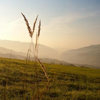 White Carpathians / Z Bílých Karpat